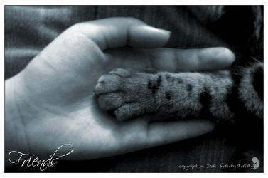 - Friends - by s-photography