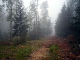 Forest 1004 by MASYON