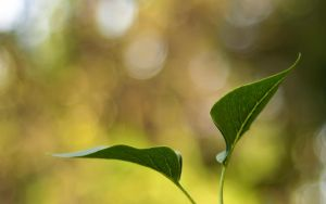Just Leaves by jsz