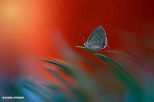 My red world by fitrido