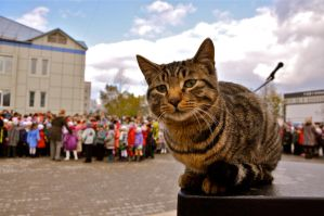 the cat event by das-kleine-herz