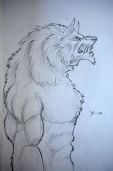 werewolf drawing 10 by tribalwolfie