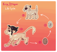 [KD] Life Cycle by Knyuo