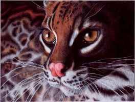Margay Cat - BIC Ballpoint Pen by VianaArts