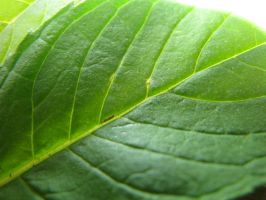 Leaf texture 3 by TCJstock
