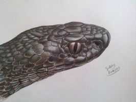 viper snake by subhy