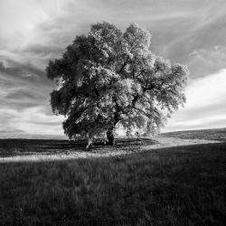 Tree Of Saosis by 1uno