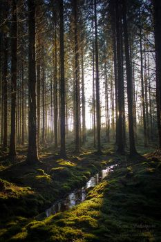 Enchanted Forest IV by SaraJArts