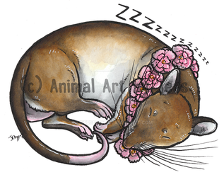 Charlie Brown, Gambian pouched rat by lotusdogz