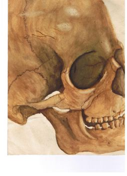 Watercolour skull by darksidedoc