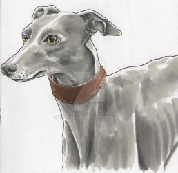 Greyhound Doodle by Helena998