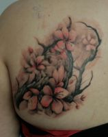 cherry blossoms by PaintedPeople