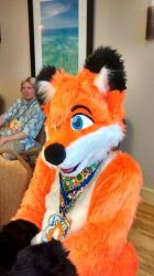 The Fox by tails4evr