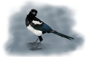 Magpie by marthagose