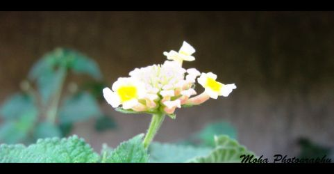 Flower 004 by moha92