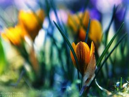 Colorful Spring by AljoschaThielen