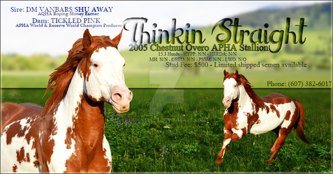Thinkin Straight - APHA Stallion (ad practice) by rhinebeck