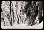 snow in the forest by rdalpes