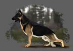 GCh. Runestorm's Highland Laddie by Runestorm-kennel
