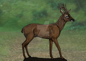 A Roe Buck called Rufus by rlcillustration