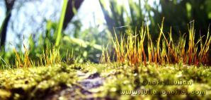 Grass 2 by Revolt666
