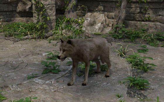 Temple Wolf 2 by efredrules