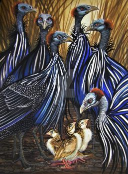 Vulturine Guinea Fowl and Keets by HouseofChabrier