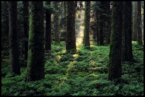 Enchanted Wood by FlorentCourty