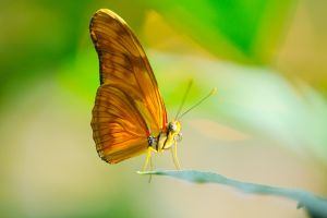 Butterfly bokeh by Manyroomsphotography