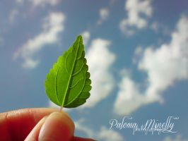 Leaf by PMinelly