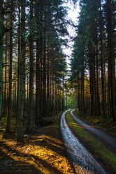 Enchanted Forest II by SaraJArts