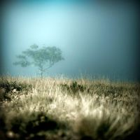 Mysterious tree by julie-rc
