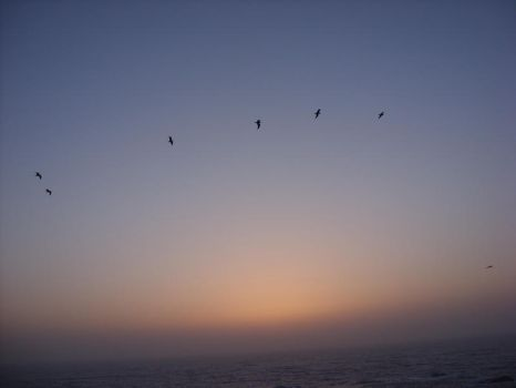Sunset Gulls by SJG-photography