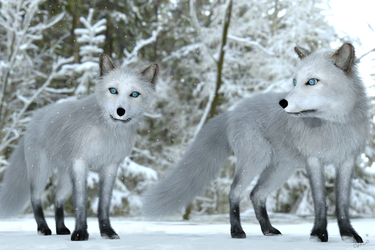 Foxes in the Snow by Zethara