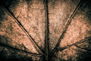 Leather Veins by Smurfage