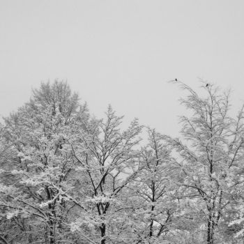 Winter Trees by totalizzyness