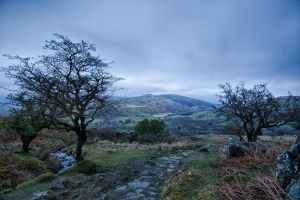 Minffordd Path by CharmingPhotography