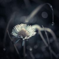 ..: First Morning dew - II :.. by Mademoiselle-P