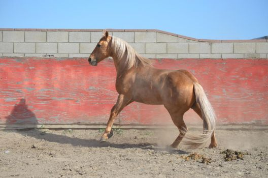 DWP FREE HORSE STOCK 153 by DancesWithPonies