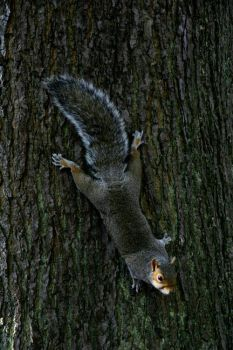 Squirreling in a tree by overtilt