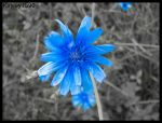 One Blue Flower by Kayley1590