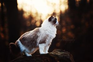 queen of the forest by awphotoart