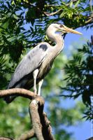 Heron by Havidor