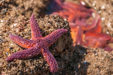 Starfish in colors summer by Laurent-Dubus