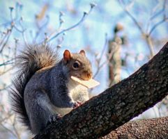 Squirrel On A Cracker by LisaAnn1968