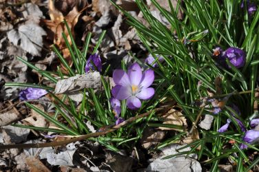 My 1st flower photo of the year by snoogaloo