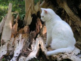 Cat with Broken Trunk 9 by loopyker-stock