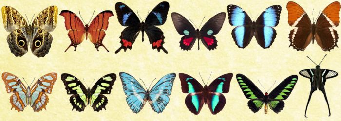 Windows Icons - Butterflies Set 2 by Nastino47