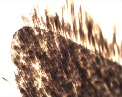 Microscope: Moth Wing by Soldeen111