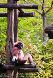 Monkey relaxing by Neo-dessinator